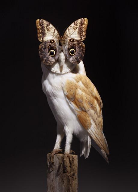 Nancy Fouts, Butterfly Owl. Courtesy Moniker Art Fair