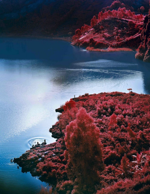 Richard Mosse, Lac Vert. Image courtesy the artist.