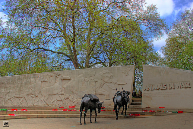 The Animals in War Memorial in Hyde Park pays tribute to all animals who died in wars during the 20th century, from pigeons to elephants. Photo by Gábor Hernádi.