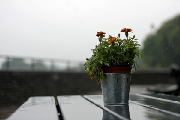 Rainy pub bench