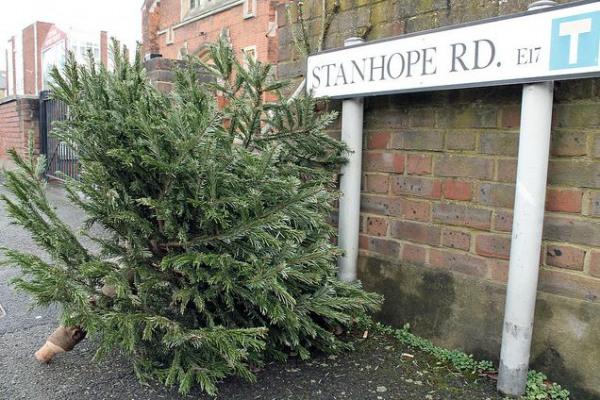 christmastree_0601114