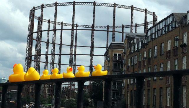 duckies_090614