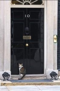 downing street cat
