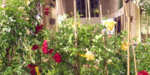 Museum Of The Month: Riot Of Roses & Chuck's Backyard