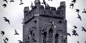 Photo of the Day: Da`Birds