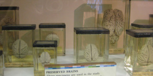 Museum of the Month: The Grant Museum