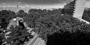 Elephant & Castle Residents Fight To Save Trees
