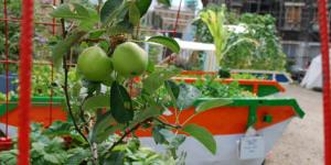 Preview: Edible Gardens Open Day