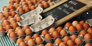 The Friday Photos: Eggs