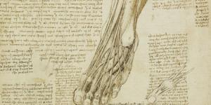 Preview: Da Vinci Anatomical Walks