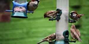 Feed The Birds Ready For Big Garden Birdwatch 2013