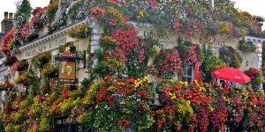 Which Is The Best Pub In Notting Hill? The Results