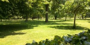 Nature-ist: Margravine Cemetery, Hammersmith
