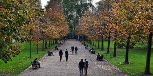 The Friday Photos: Autumn Leaves