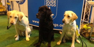 A Museum Marathon Walk For Guide Dogs UK
