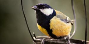 Support London's Birds: Big Garden Birdwatch 2014