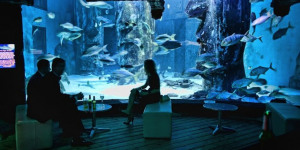 Find Your Fish In The Sea This Valentine's Day At London Aquarium