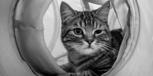 Londonist Visits Lady Dinah's Cat Emporium