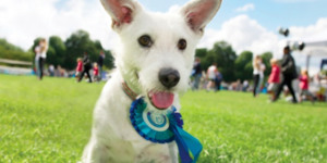 Barking Mad Fun In Battersea Park