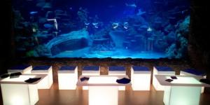 Face The Deep After Dark At London Aquarium Lates