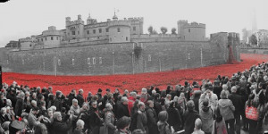 In Photos: Poppies At The Tower Of London