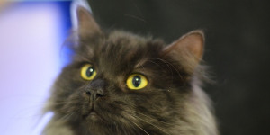 Sorry, Dogs: Battersea Cats Home Gets Listed Status