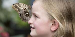Natural History Museum All Aflutter With Sensational Butterflies