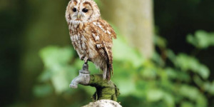 Discover North East London Wildlife By Bike