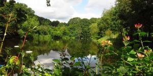 London Short Fiction: Heath Swimming