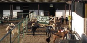 London City Farms: The Lowdown