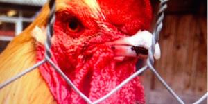 Instagranimals: London's Happiest Animals On Instagram