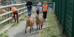 Oxford Vs Cambridge Goat Race @ Spitalfields City Farm