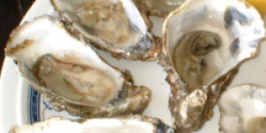 The Forgotten Treasures In Your Oyster