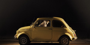 Art Preview: The Silence Of Dogs In Cars @ Little Black Gallery
