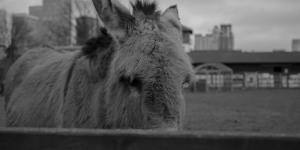 The Friday Photos: London Donkeys