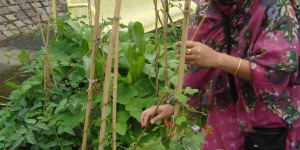 Gardening Against The Odds: Sharing Makes You Happy