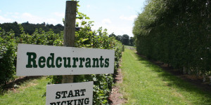 Nearest Pick Your Own Farms To London