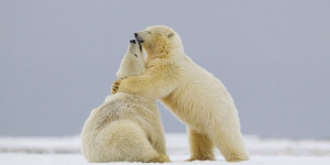 On The Edge: Endangered Animal Photos Displayed At ZSL London Zoo