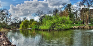 Clissold Park Fish To Be Poisoned To Eradicate Non-Native Species