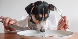 Barking Mad: Steak Restaurant Launches Brunch For Dogs