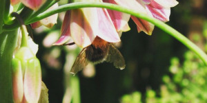 Green Teasers: The Best Open Garden Squares On Instagram