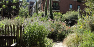 London's Little Gardens: Phoenix Garden