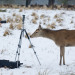 A photographer encounters a particularly curious Deer at Richmond Park, London. Kris Wood. 05/02/2012