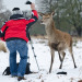 A photographer is forced to shoo away a Deer that has gotten too close for comfort at Richmond Park, London. Kris Wood. 05/02/2012