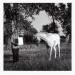 Bruno Jakob - Invisible Painting (Horse). Courtesy Hayward Gallery.