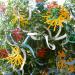 Nebulous Bouquet at PM, 2012. Photo Courtesy of Tsai & Yoshikawa