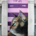 Masai's cat, appropriately on Cheshire Street.
