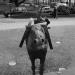 War memorial donkey by Brron