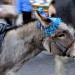 Mayfair donkey by Ronald Hackston