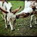 Mudchute City Farm donkey by buckaroo kid